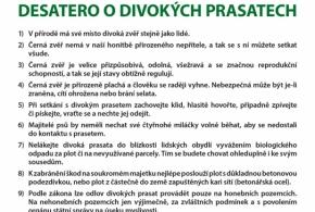 Desatero o divokých prasatech, zdroj: web obce Zdiby